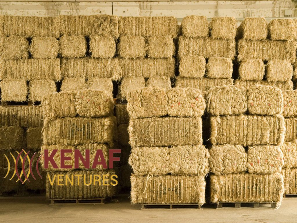 Kenaf Ventures - Growing Buildings Naturally - SDG 12 - Social Impact Israel