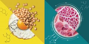 Investing in Alternative Proteins - SDG 2 -Social Impact Israel